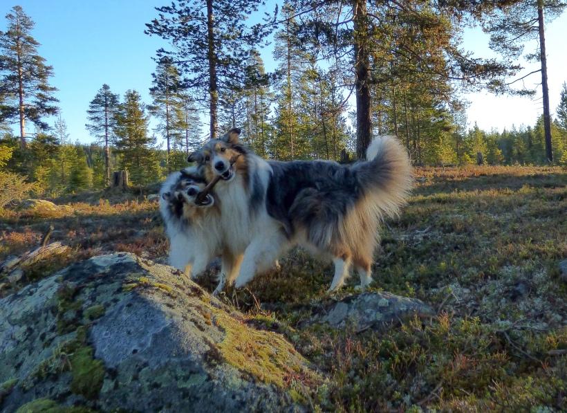Hunde_Stock